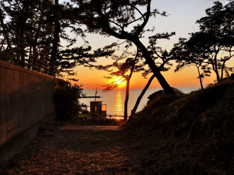 松林から見える一色海岸の夕日